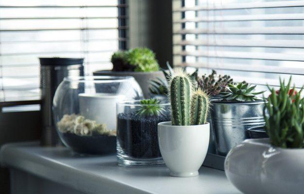 ghiveci plante